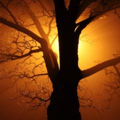silhouette of tree, backlit by sun; Image via Pixabay, CC0 Public Domain