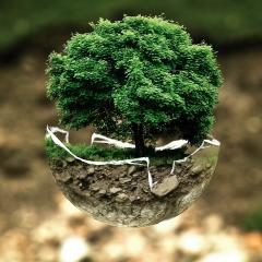 tree in soil in broken sphere; Image via Pixabay, CC0 Public Domain
