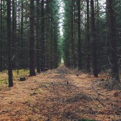 forest; Image via Pixabay, CC0 Public Domain