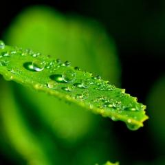 dew on leaf; Image via Pixabay, CC0 Public Domain