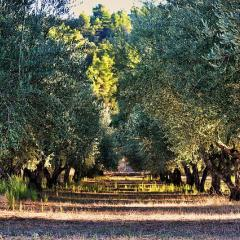 olive trees, Greece; Image via Pixabay, CC0 Public Domain